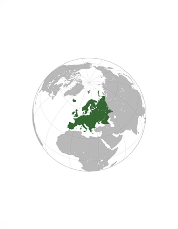 + Shipping costs to Europe / + Gastos Envío Europa